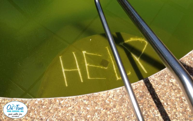 Green to Clean Pool Cleanup Service in Sarasota