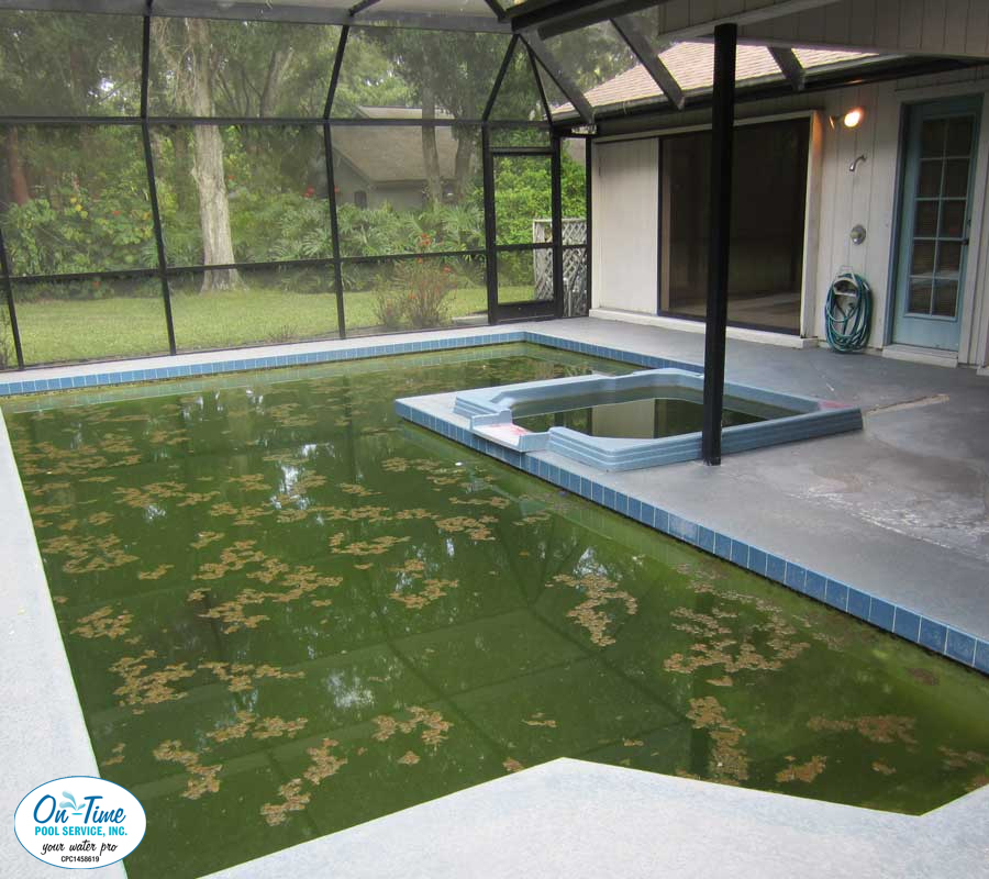 Green to Clean Algae Removal from On-Time Pool Service
