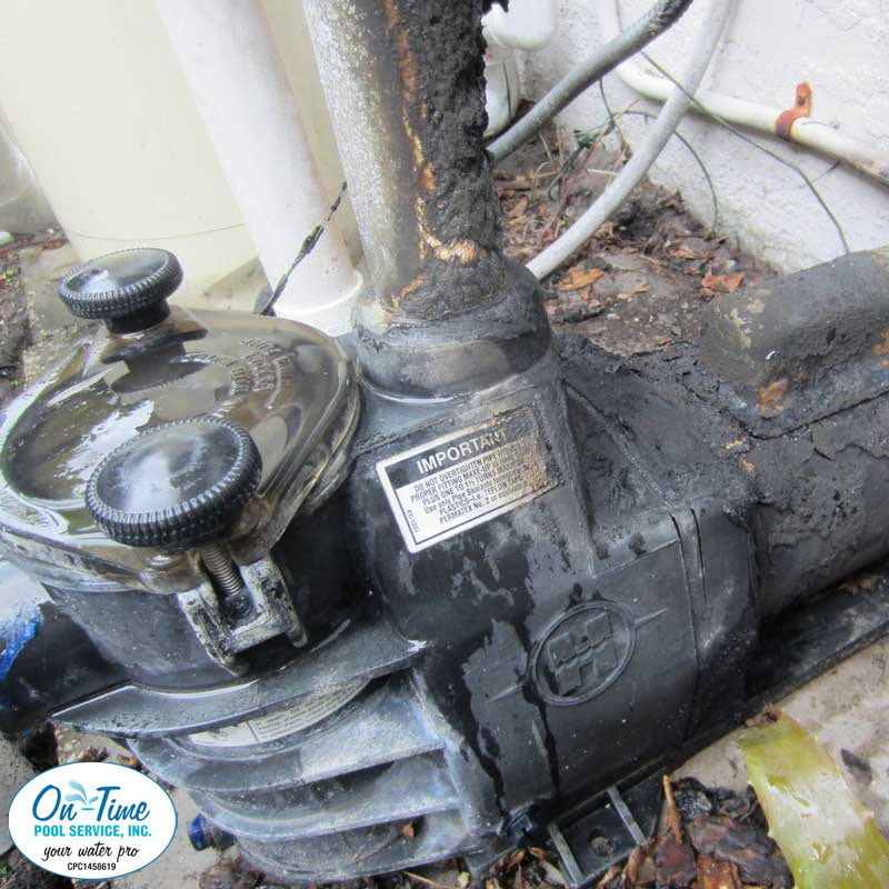 Sarasota Pool Pump Repair & Replacement
